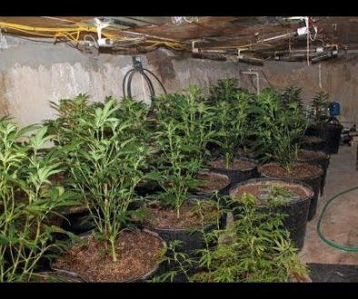 cops-find-marijuana-grow-op-in-s