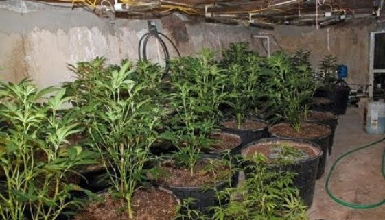 cops-find-marijuana-grow-op-in-s